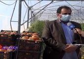 رونق صادرات کالاهای غیر نفتی در بندر جاسک/ فیلم