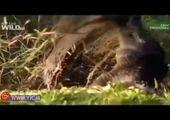 وقوع فاجعه برای شامپانزههای باغ وحش تهران + فیلم