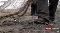 کاهش ۲۵ درصدی صید ماهی در مازندران